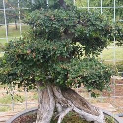 Photo Of Matsuda Landscape Nursery Newcastle Ca United States