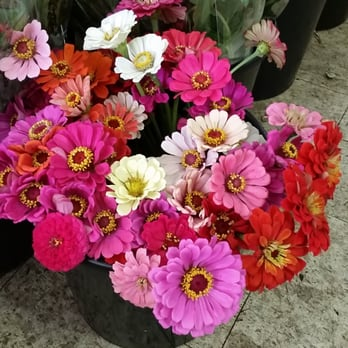 import flowers 19 reviews florists 3636 murphy rd sylvan