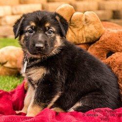Saving Paws Rescue, Az - 19 Reviews - Animal Shelters