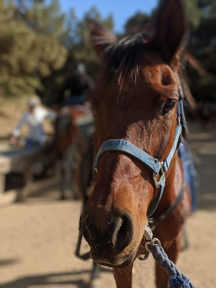 Social Spots from Marshall Canyon Equestrian Center
