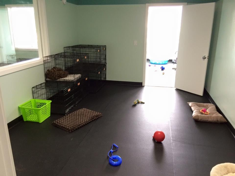 dog play room dog breeding photo of biscuits doggie daycare tacoma wa united states one our small dog play rooms rubber flooring toys cozy beds