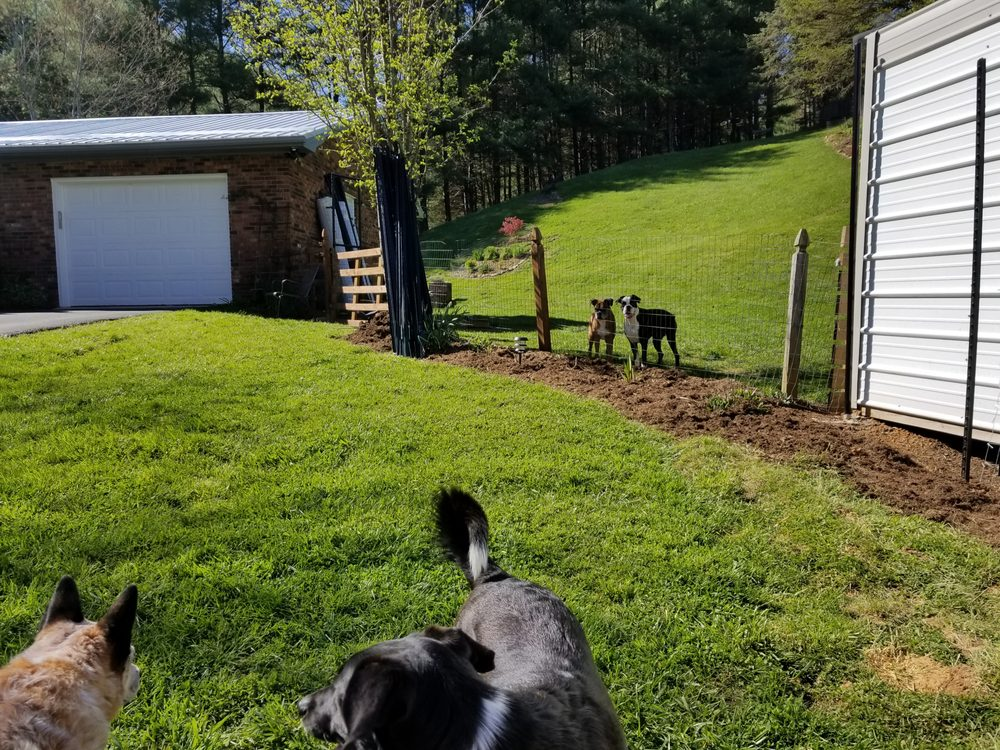 Happy Paws Dog Den: 7095 Hwy 421 N, Vilas, NC