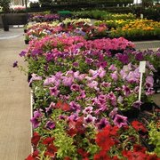 gales garden photo of gales garden center willoughby hills oh united states - Gales Garden Center