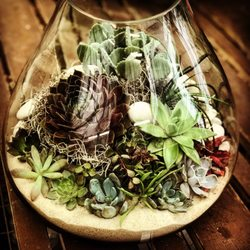 Photo Of Atlantic Gardening Company   Raleigh, NC, United States.  Terrariums, Succulents