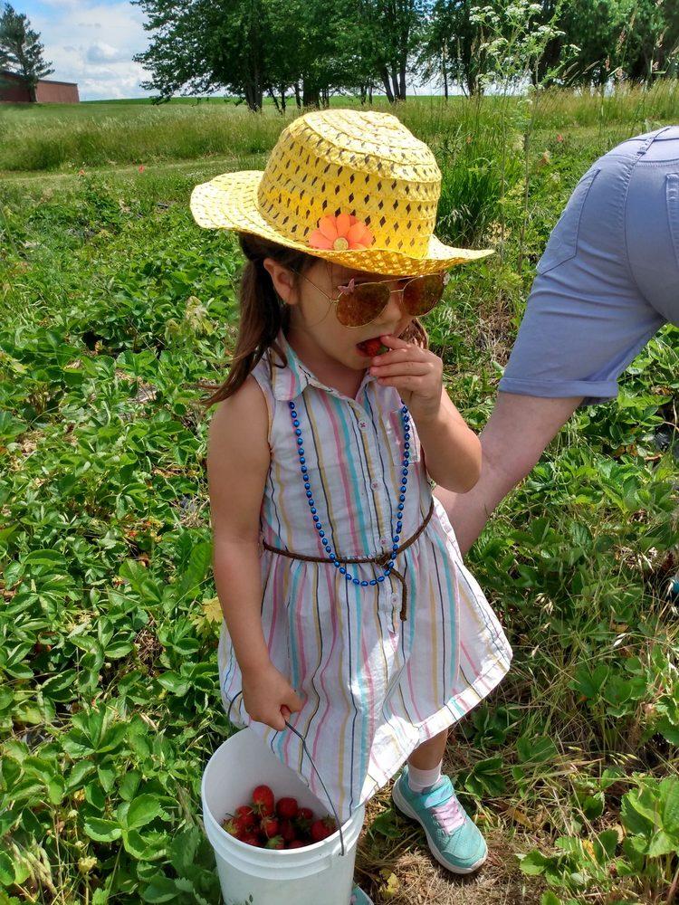 Braffet Berry Farm and Orchard: 9010 E 2250 North Rd, Carlock, IL