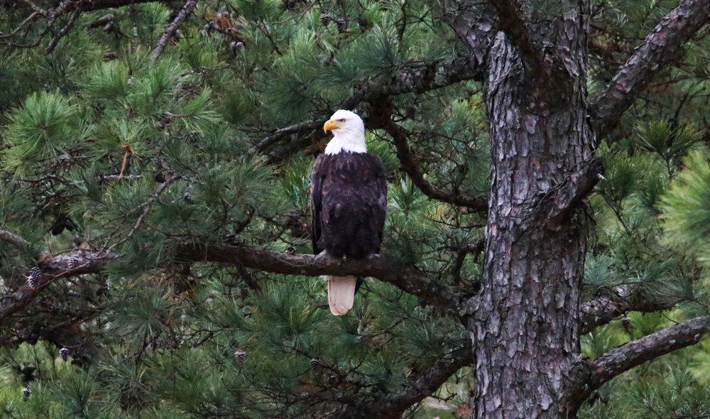 Deer Mountain Events: 7717 Contran Rd, Ozark, AR