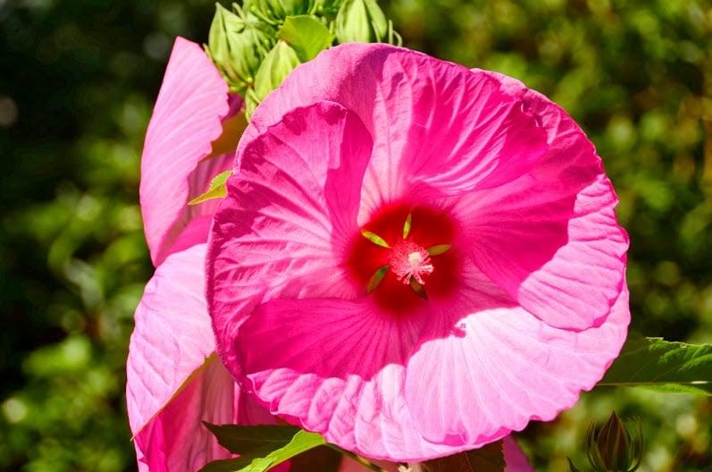 Tiffany Gardens B&B: 15 King John Dr, Londonderry, NH