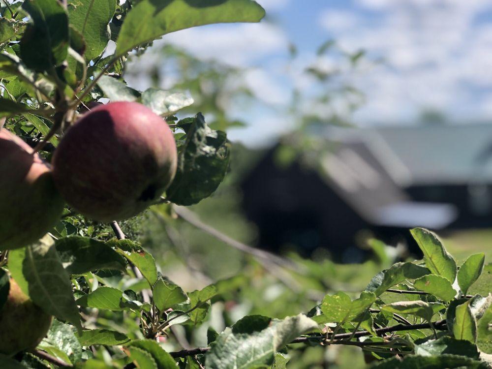 Brown's Beautiful Blueberries: 493 Coburn Hill Rd, Craftsbury, VT