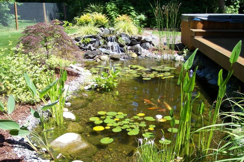Photos for specialty ponds nw yelp for Pond companies near me