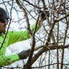 American Arborists