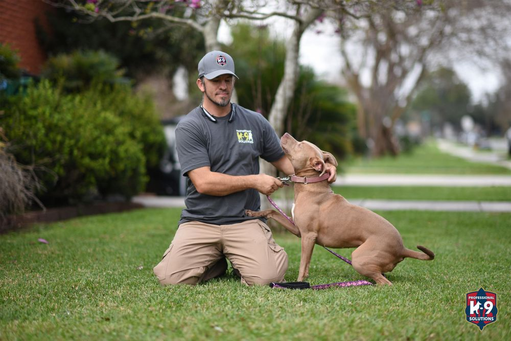 Professional K9 Solutions: 1475 29th St, Kenner, LA