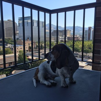 Pet Day Care Salt Lake City
