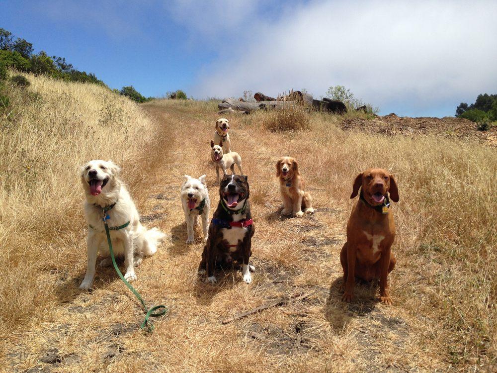 Dogs of Berkeley: 2333 Grant St, Berkeley, CA
