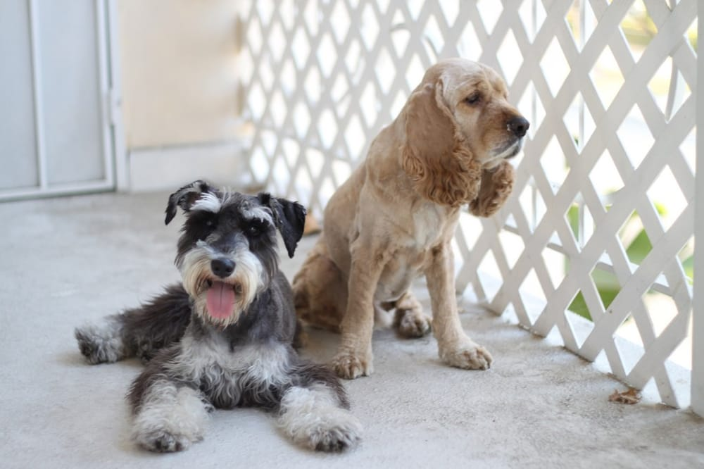 Alex the Happy Dog Grooming - 38 Photos & 126 Reviews ... - photo#13