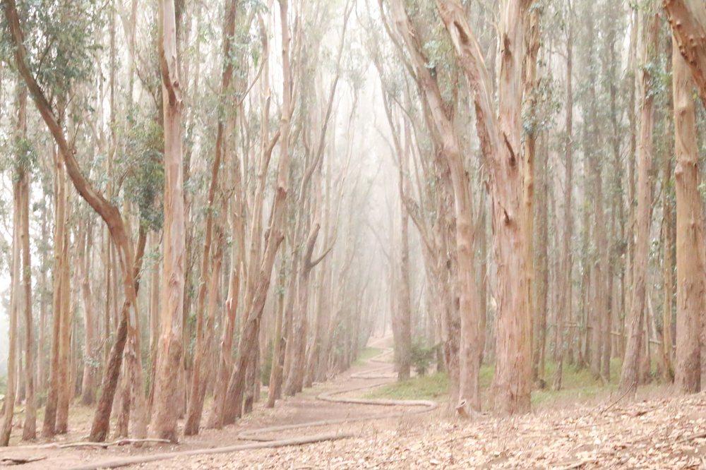 Lovers' Lane at the Presidio