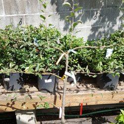 Dennis 7 Dees Landscaping Garden Centers 15 Photos 16 Reviews Nurseries Gardening