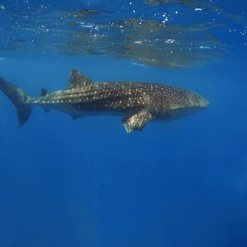 Island Divers Hawaii - 165 Photos & 283 Reviews - Scuba