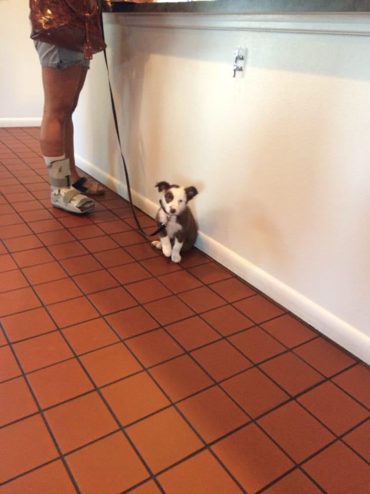 DeSoto Animal Clinic