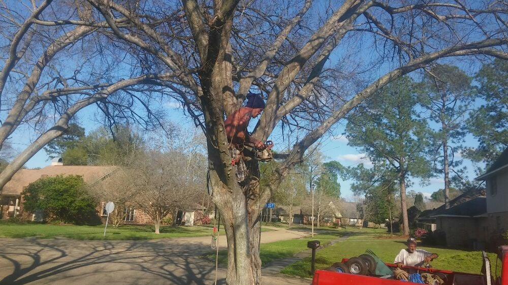 Toro Tree Experts: Baton Rouge, LA