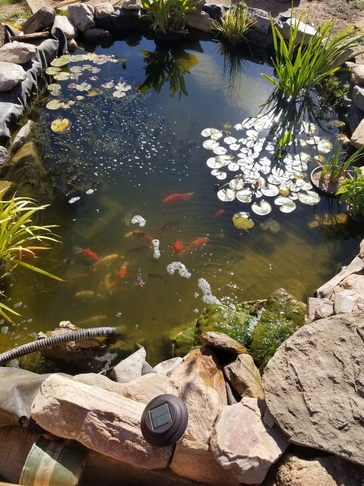 Absolute Landscaping and Pond Maintenance: Moriarty, NM