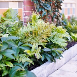 Photo Of Plants Creative Landscapes   Decatur, GA, United States