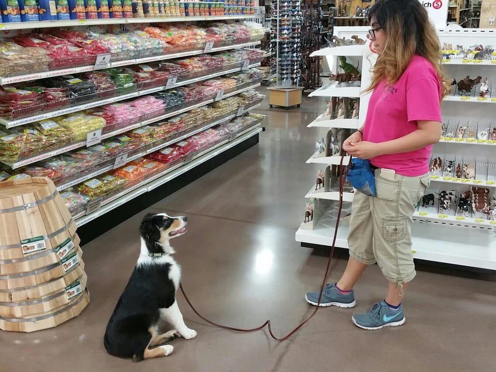 M & M Dog Training: 10874 W Locust Ln, Avondale, AZ