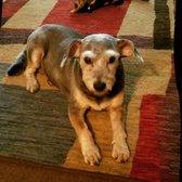 The Green Bone - 27 Photos & 50 Reviews - Pet Groomers - 2901 Rusk