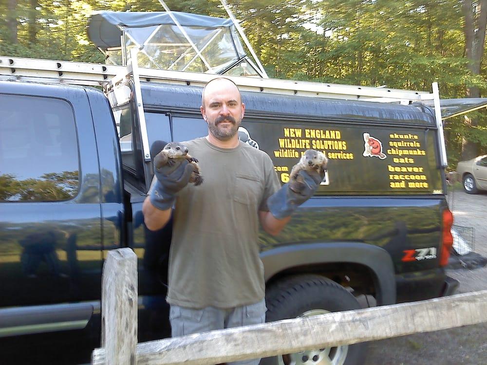 New England Wildlife Solutions: Providence, RI