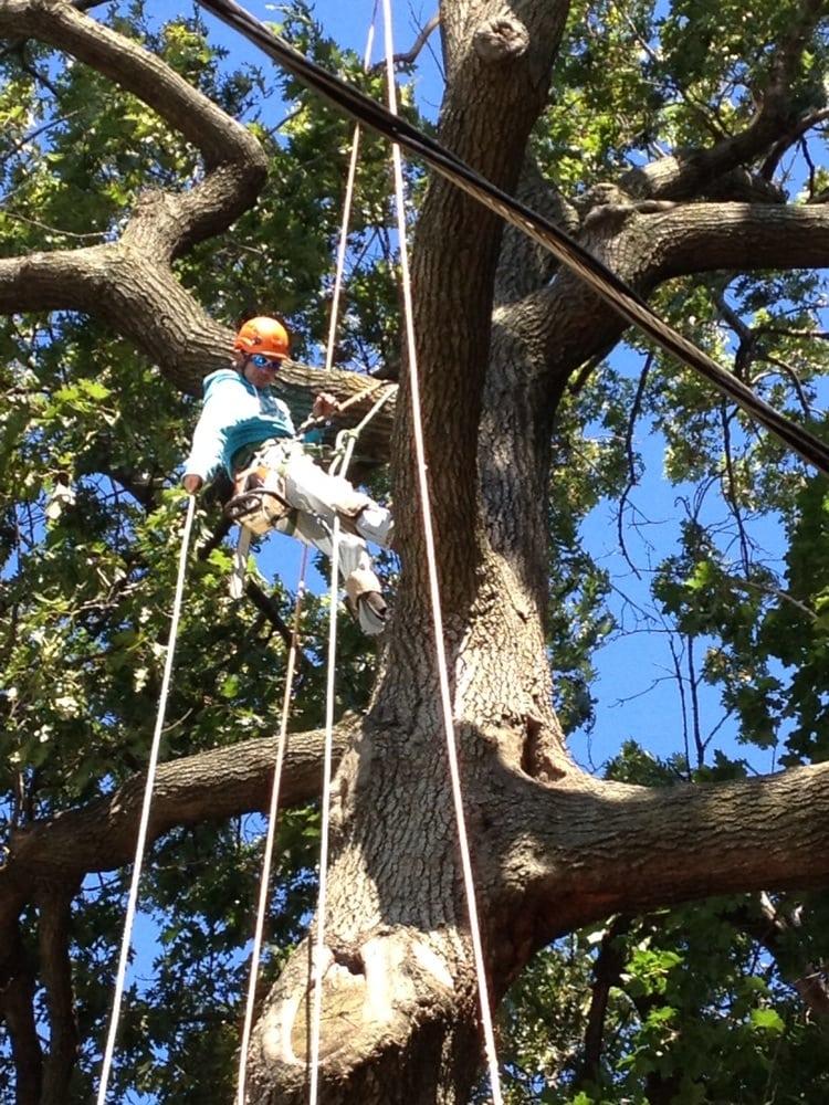 Royal Tree Service