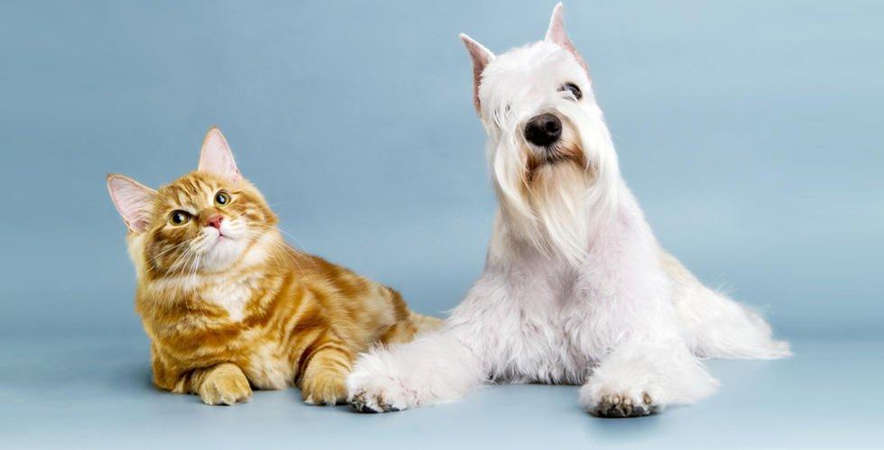 Sittin' Pretty Pet Grooming: 11320 Nys Rte 12E, Chaumont, NY