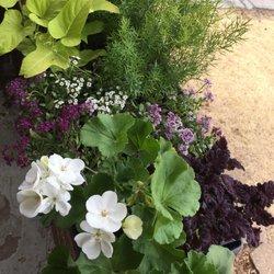 colors of spring nurseries gardening 3298 watson rd