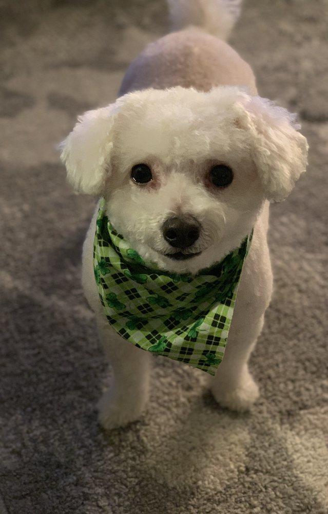 Canine Cloud Nine - 14 Photos & 25 Reviews - Pet Groomers