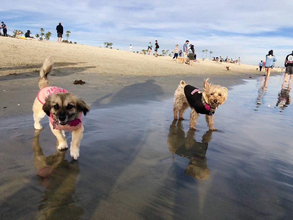 Rosie's Dog Beach