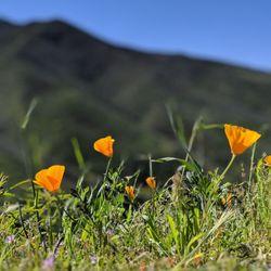 Point Mugu State Park - 646 Photos & 165 Reviews - Beaches