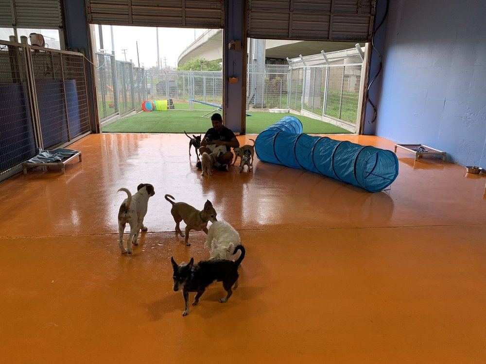 Lucy's Doggy Daycare and Spa