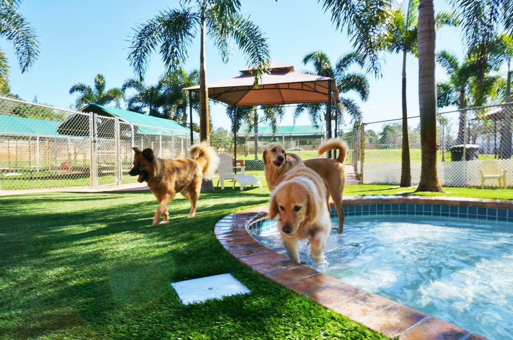 Country Inn Pet Resort & Animal Hospital: 2100 S Flamingo Rd, Fort Lauderdale, FL