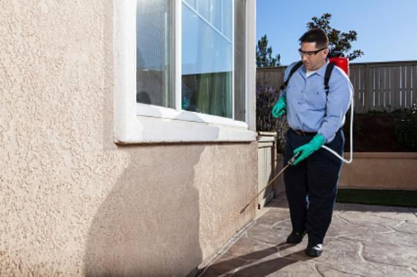 Sureshot Pest Control: 500 S Lafayette St, Greenville, MI