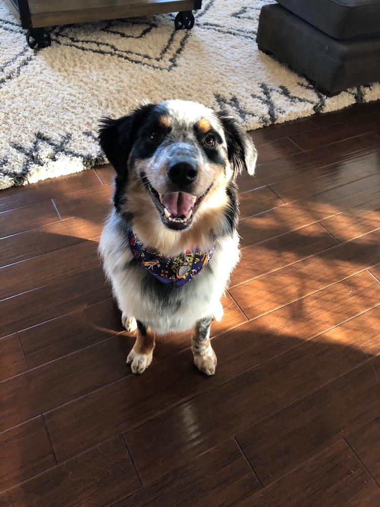 Top Dog Pet Services: Apex, NC