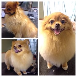 Kennel Club Grooming - 22 Photos - Pet Groomers - 33 Chandler St