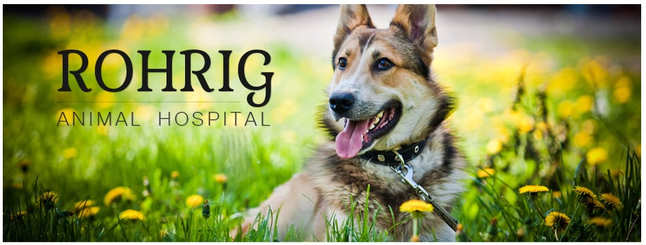 Rohrig Animal Hospital: 225 N 3rd St, Arlington, NE