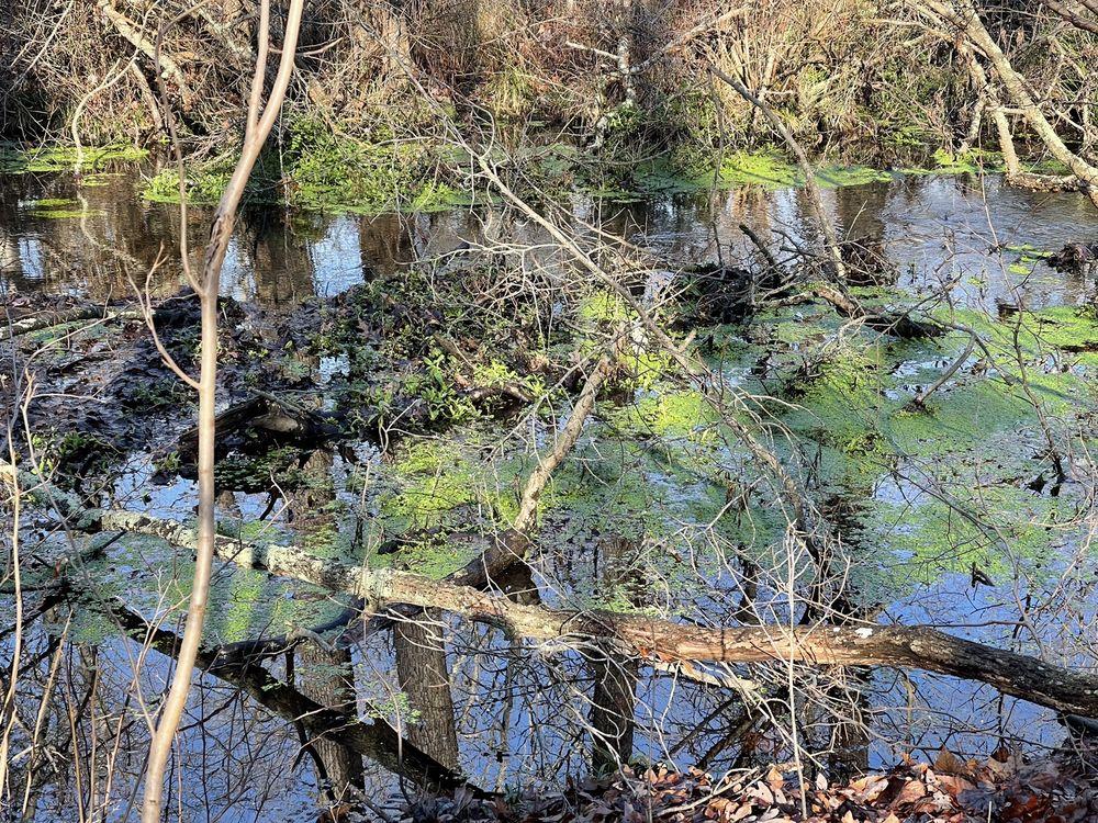 Blydenburgh Park