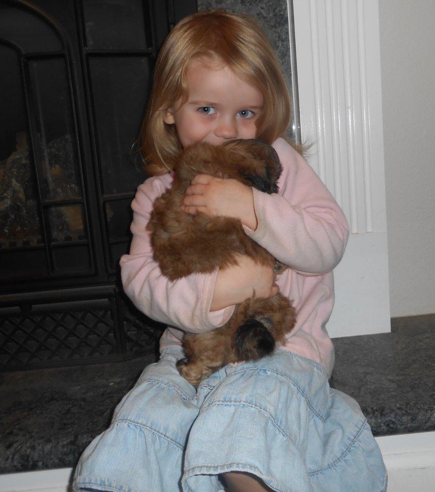 California ShihTzu Pups: 1333 Pinecroft Rd, Colfax, CA