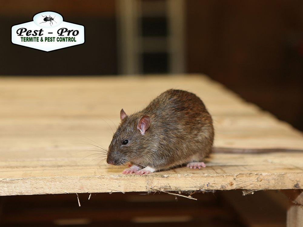 Pest-Pro Services: 3512 New Boston Rd, Texarkana, TX