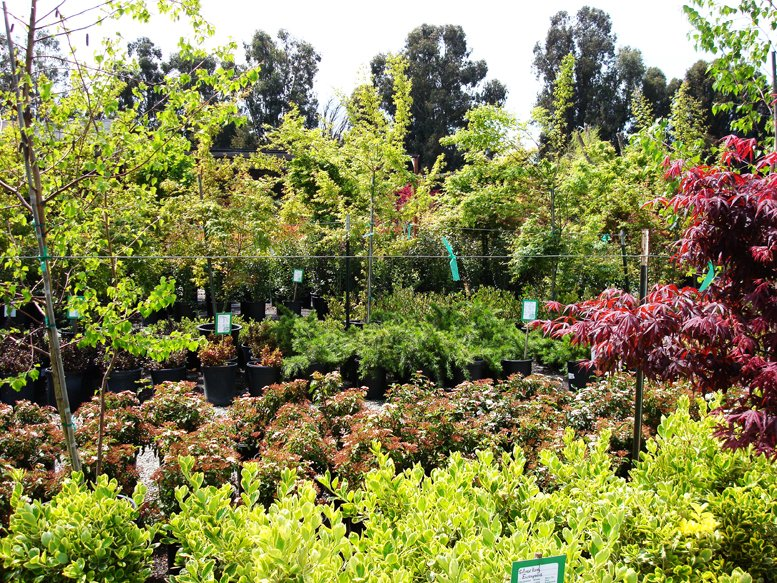 Photo Of Calaveras Nursery Sunol Ca United States