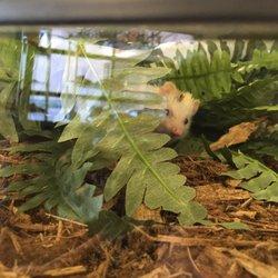 61f510c26e Reptile Mogul Exotics - 78 Photos   25 Reviews - Pet Stores - 2155 E ...