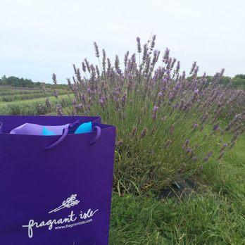 Fragrant Isle Lavender Farm and Shop - 29 Photos & 22