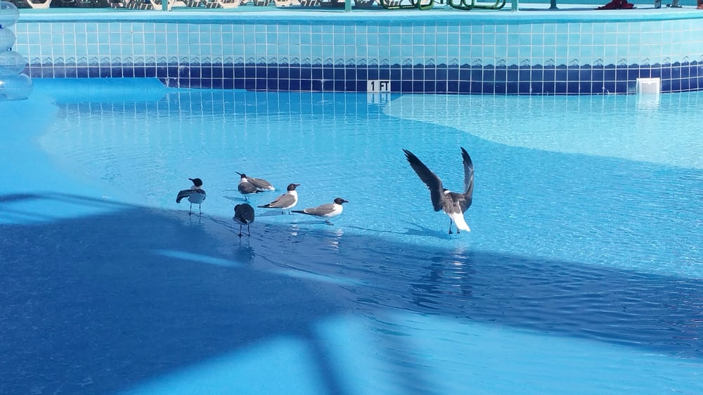 When the park closes the birds like the wave pool ...