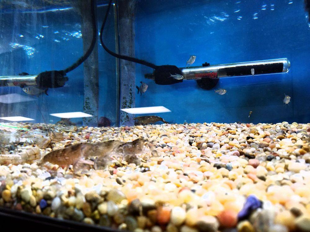 Nature Aquarium 80 Photos 85 Reviews Local Fish