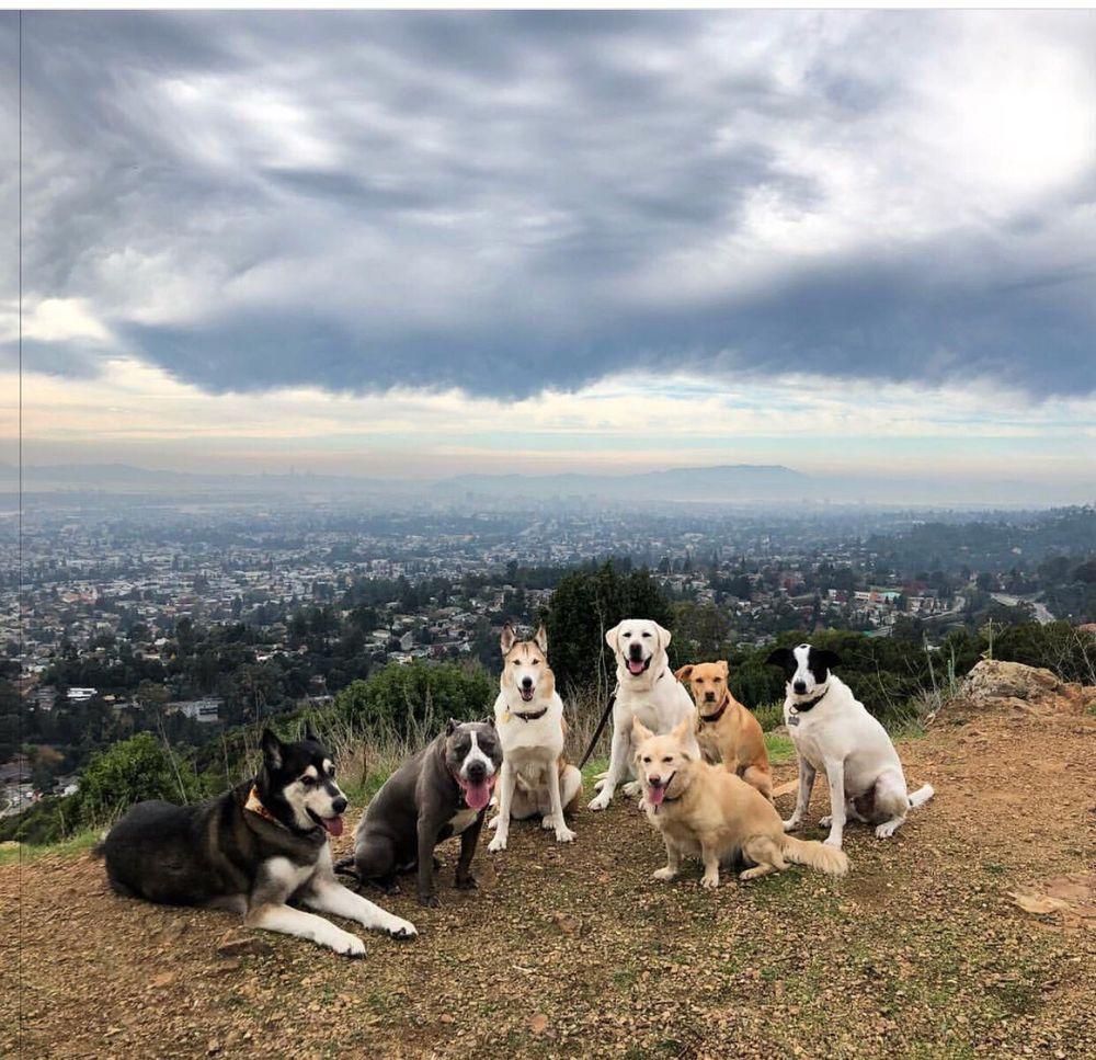 The Natural Dog: Oakland, CA