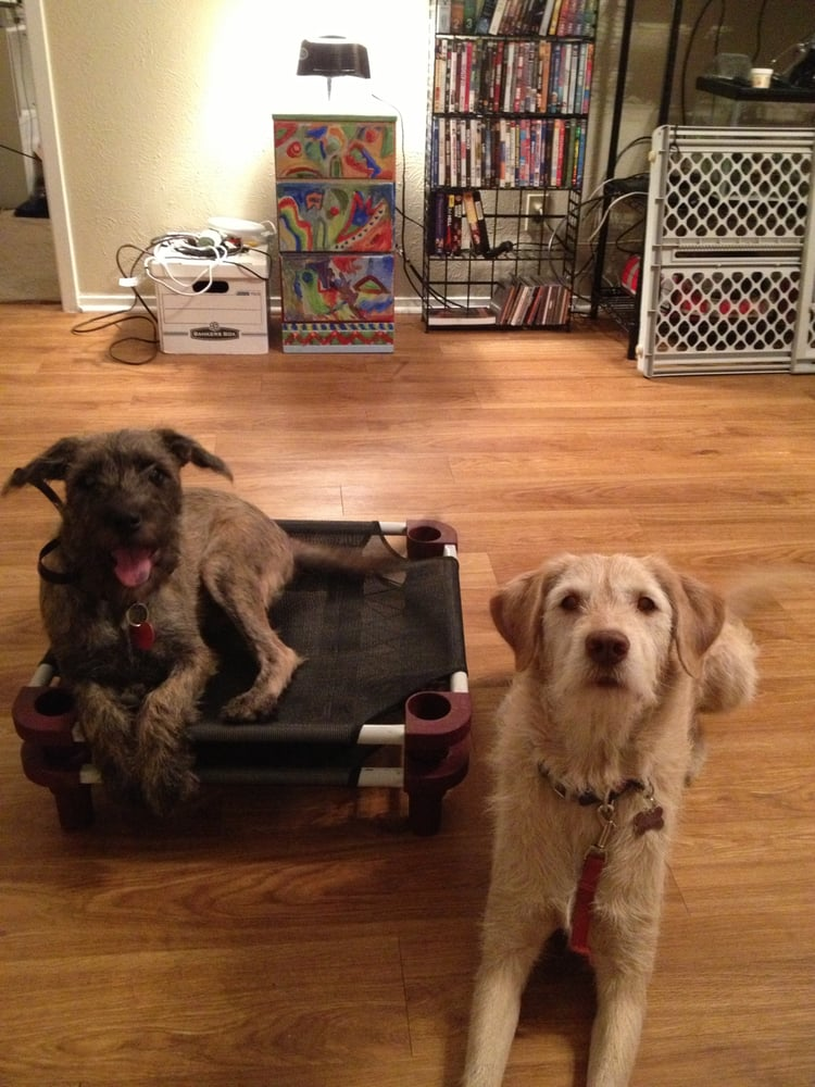 Dog Training Woodinville